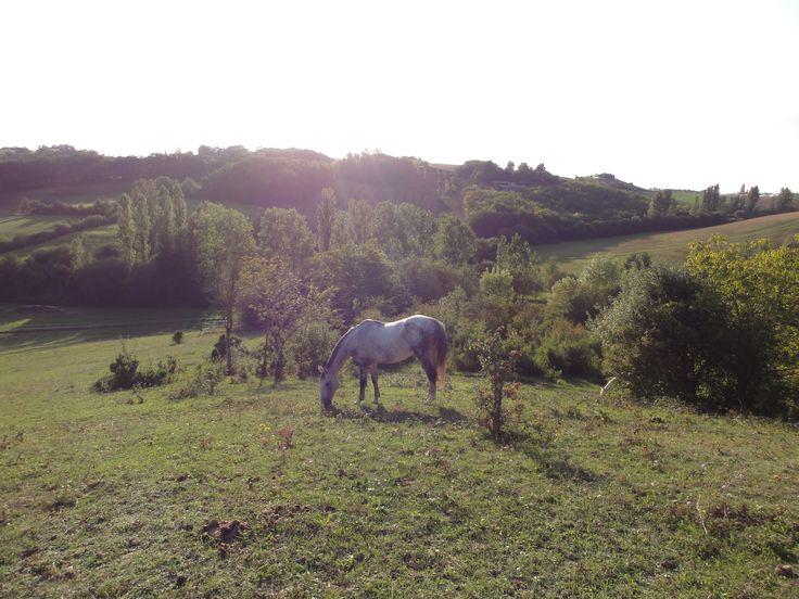 Camping Domaine de Merlanes in Molieres, Tarn en Garonne