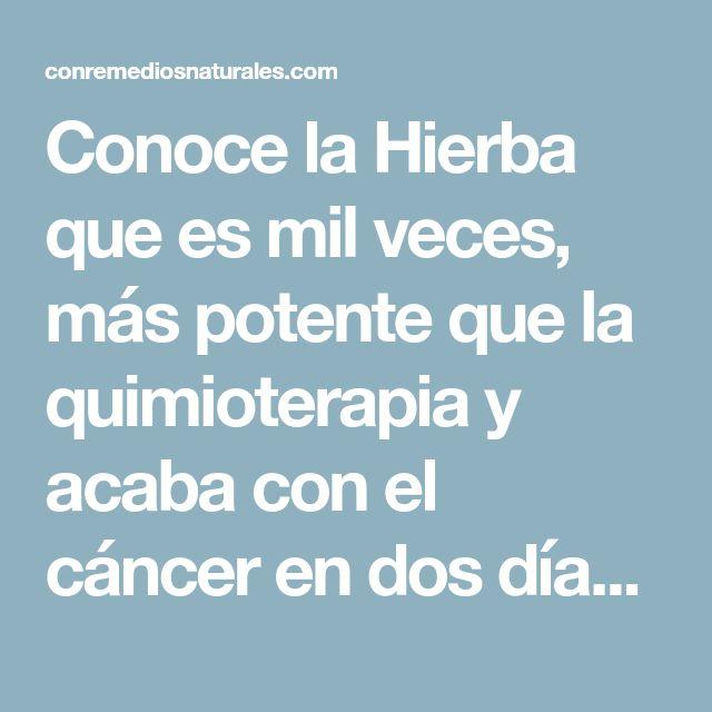 Conoce la Hierba que es mil veces, más potente que la quimioterapia y acaba con el cáncer en dos días, sin dañar el organismo. - Con Remedios Naturales