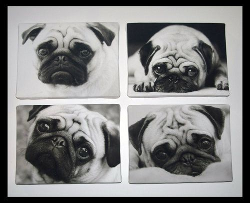Pugs Black & White Set of 4 Canvas Pictures Prints:  Pug-Dog, Canvas Pictures