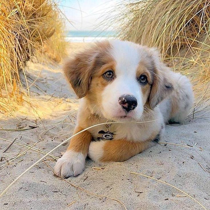 Niedlich Welpe Hund Tier Haustiere In 2020 Cute Animals