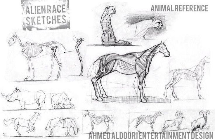 25  beautiful animal anatomy ideas on pinterest