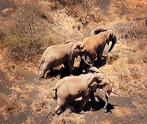 Supercomputer-Powered Drones Shut Down Rhino Poaching in This Park—Can They Save Africa's Elephants Too? | TakePart