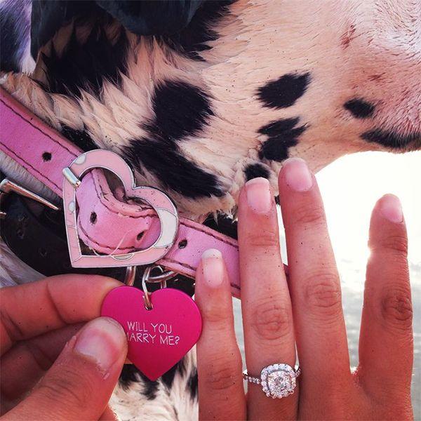 Dog proposal, proposal on dog's collar: perfect