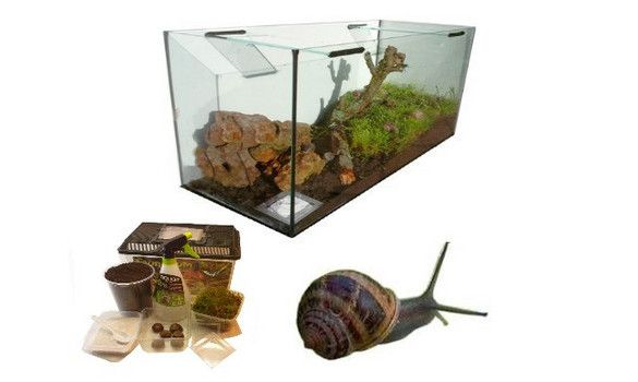 kits complets escargots terrarium accessoires commander l 39 cole les escargots. Black Bedroom Furniture Sets. Home Design Ideas