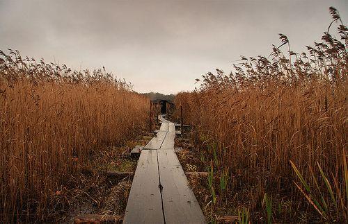 Viikki wooden trail