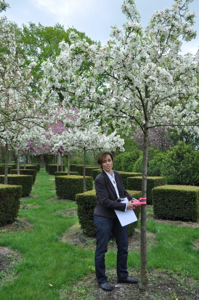 Auswahl Traumgarten Gartenbaume Baume Kaufen