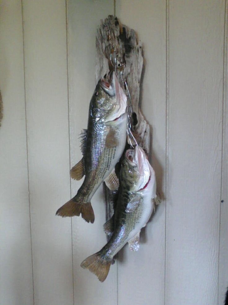 17 best images about bass on pinterest fishing charters for How to use a fish stringer