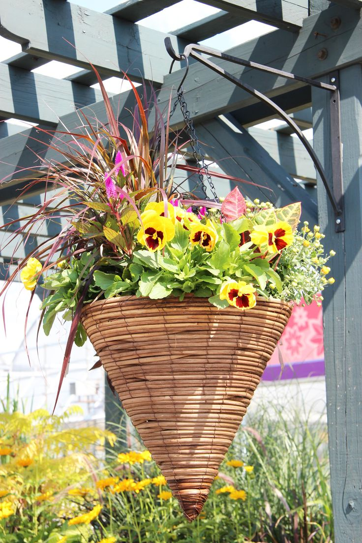 Fall Hanging Basket Fall hanging baskets, Hanging flower