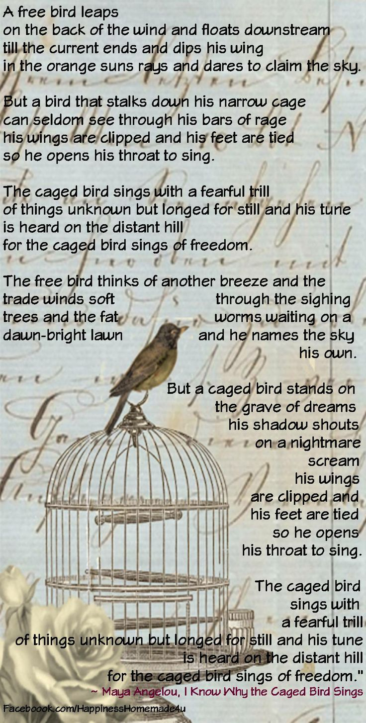 i know why the cage bird I know why the caged bird sings is an autobiography written by maya angelou she describes about her hard life caged growing up as a black.
