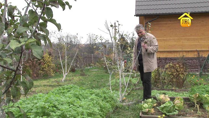 Обрезка и формирование плодовых деревьев // FORUMHOUSE