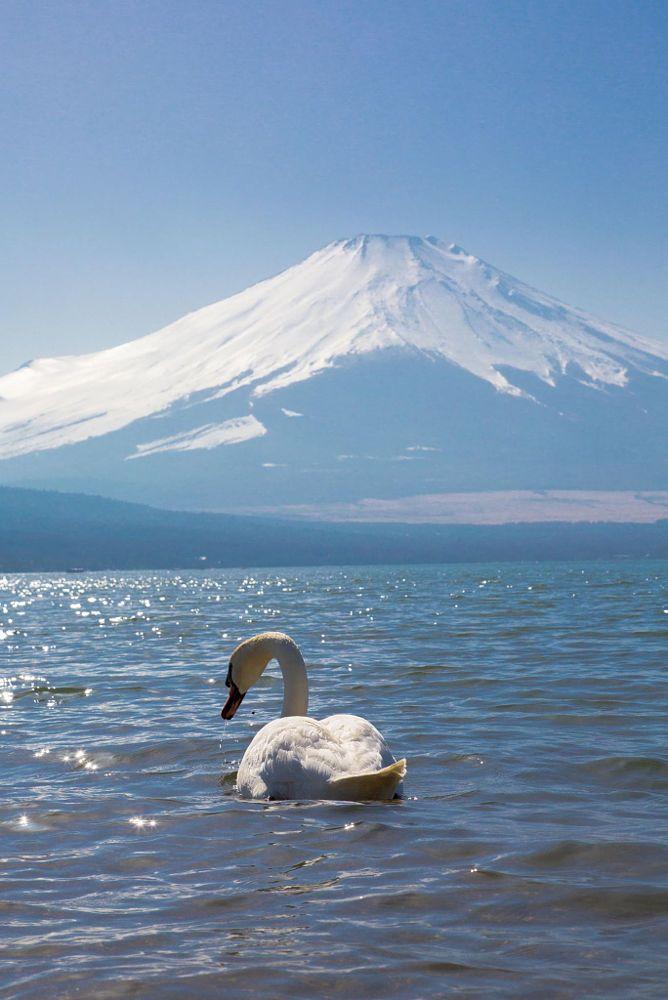 Fuji Japan  by daidaikemool on 500px