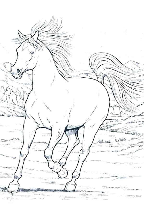 detailed horse coloring pages free realistic horse coloring pages ...
