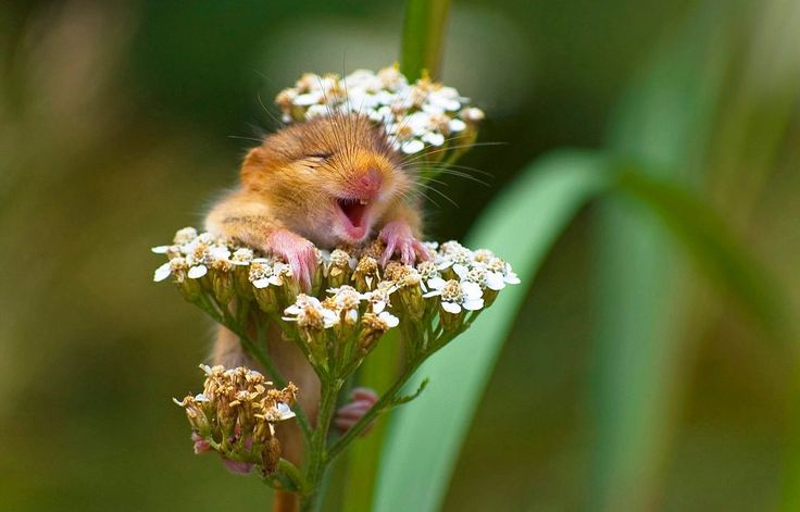 The happiest mouse in the world!  He makes me smile!