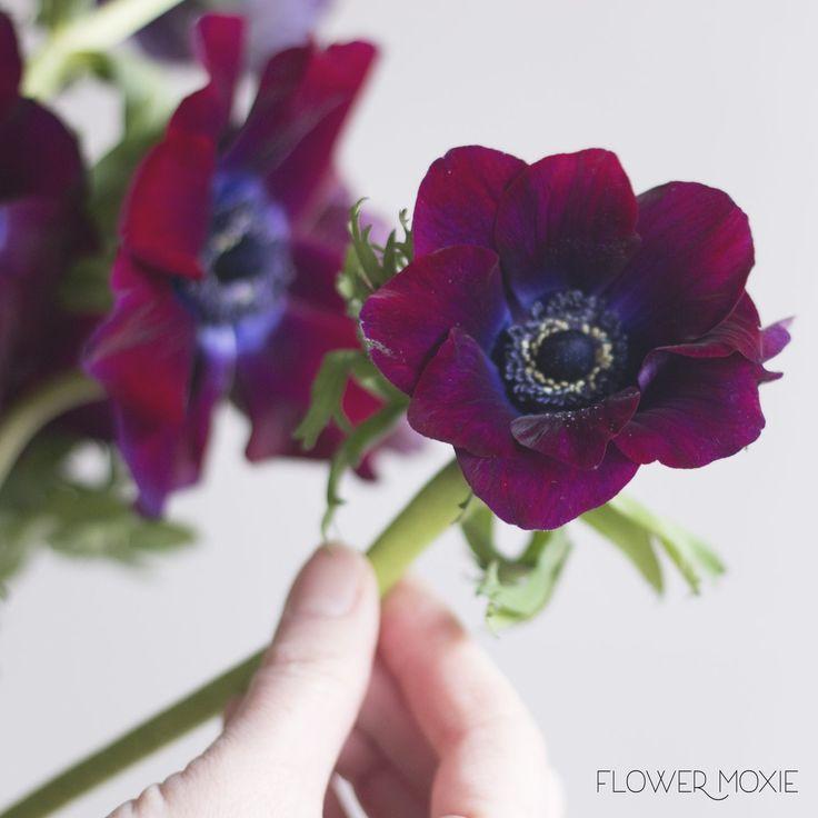 Burgundy Anemone Flower Fresh Wedding Flowers Diy Bridal Bouquet Cheap Wedding Flowers