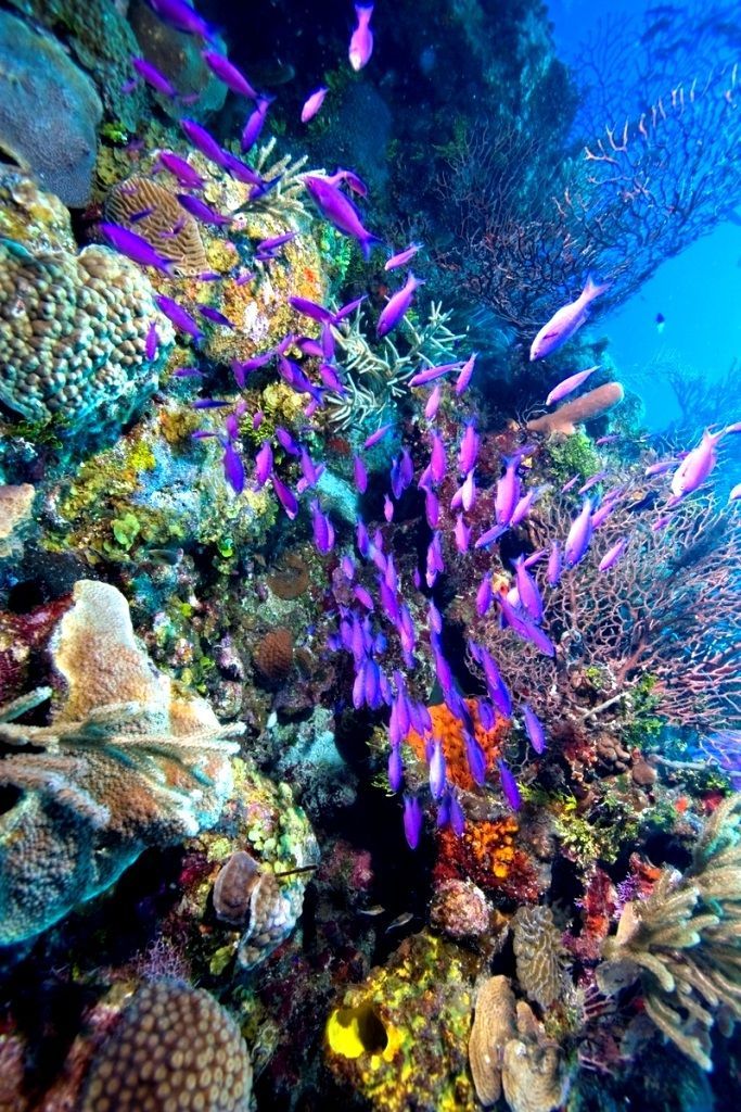 A Healthy Ocean System. Home to more than a 100 different kinds of coral and some 500 species of fish, the Belize Barrier Reef is amazing to explore.