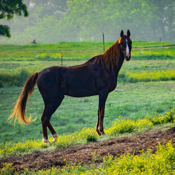 Horse by Bryan Ward
