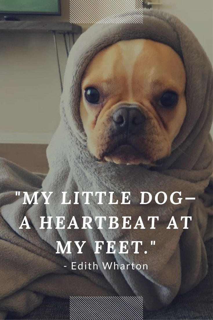 My Little Dog A Heartbeat At My Feet Dog Quote Pawsitive Vibes