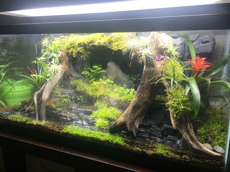 DIY Terrarium for poison dart frogs - 35 Best Aquariums, Terrarium, Vivariums Images On Pinterest