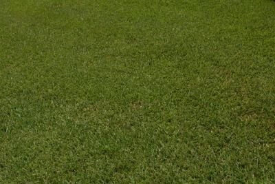 Instructions for Reseeding a Lawn thumbnail