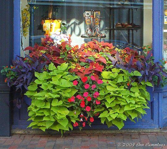 Beautiful Window Box Portsmouth Nh Downtown Storefront