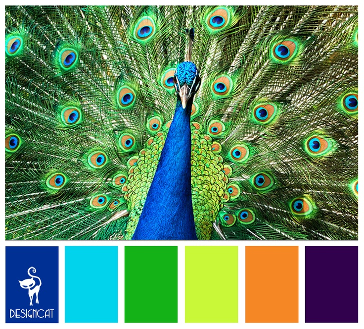 Peacock: Royal, Blue, Tiffany, Green, Lime, Orange, Purple - Colour Inspiration Pallet