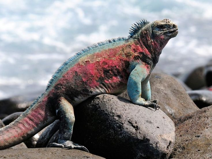 10 Of The Most Coolest Animals In The World