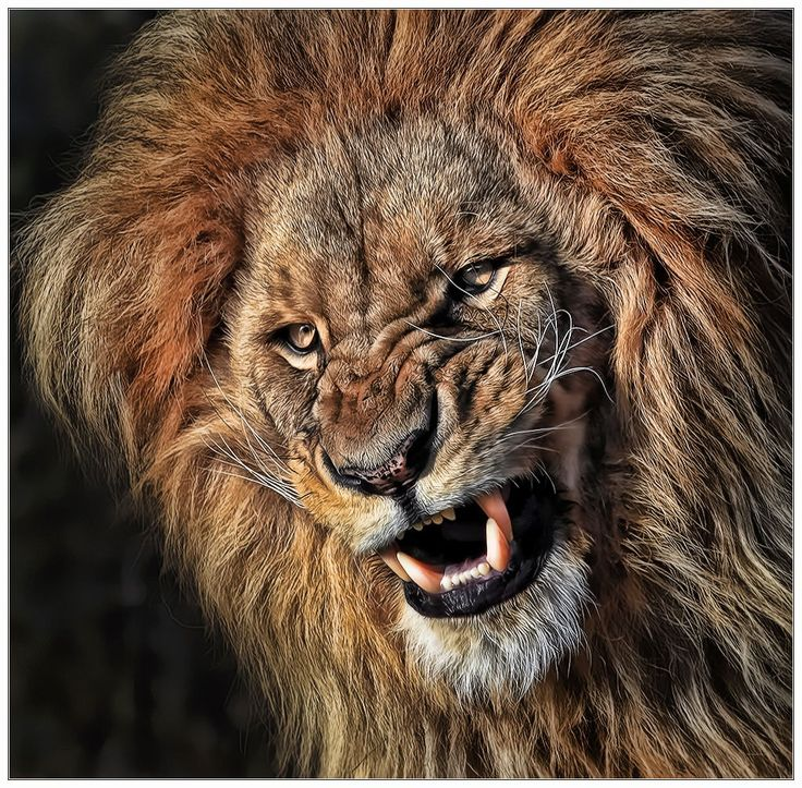Don't you dare to put this on 500px! by Klaus Wiese on 500px