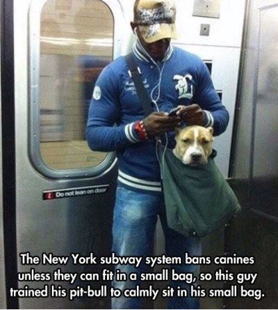 Funniest Memes – [The New York Subway System Bans Canines...]
