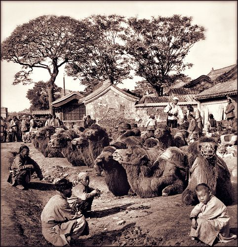 A camel square in Peking, China 1901