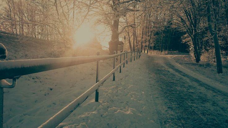 En fin vinterdag när jag var ute och gick med Nova.