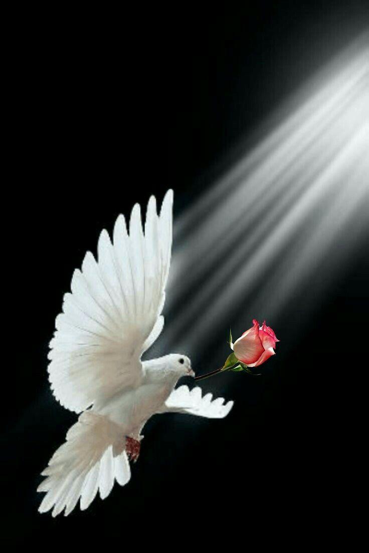 Обои цветы, птицы мира, красиво. Животные foto 17