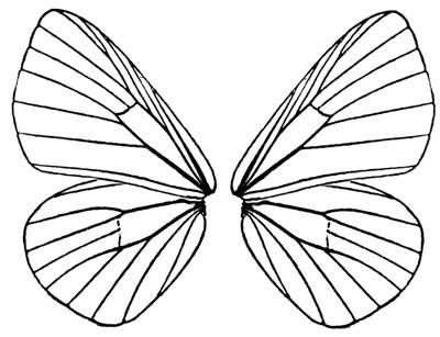 Printable Butterfly Wings Template fairy wing project