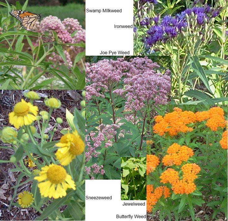 best 25+ rain garden ideas on pinterest | driveway landscaping