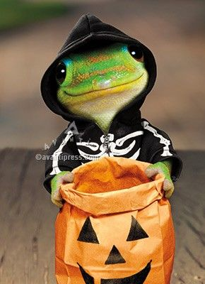 Trick Or Treat! Oh by the way did you know you could save 50% on car insurance?