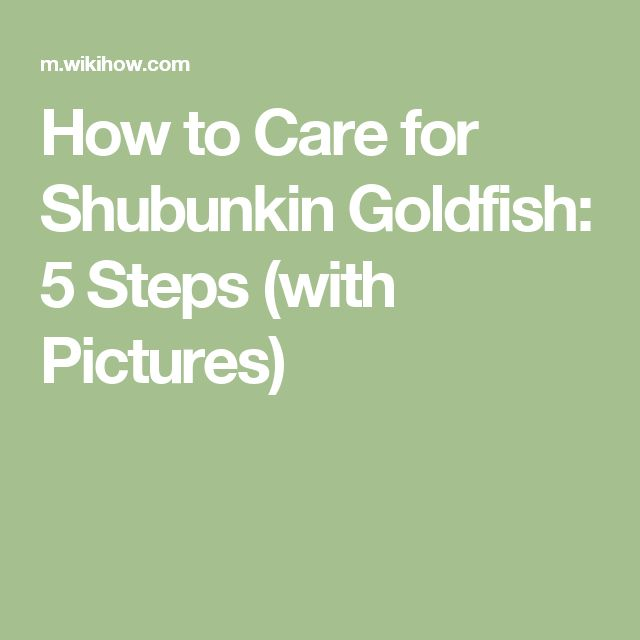 How to Care for Shubunkin Goldfish: 5 Steps (with Pictures)