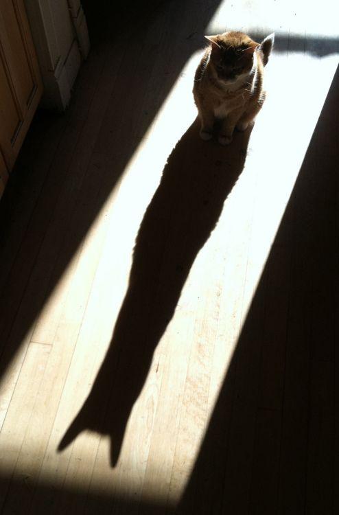 Jeu d'ombre et de lumière !