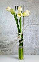 Bellis Blomsterhandel: Ridderstjerne (Hippeastrum)