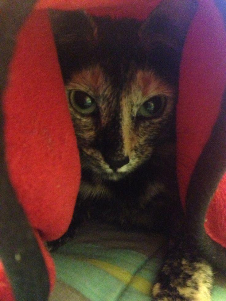 Campanita en modo Dark Moul .... Gatito