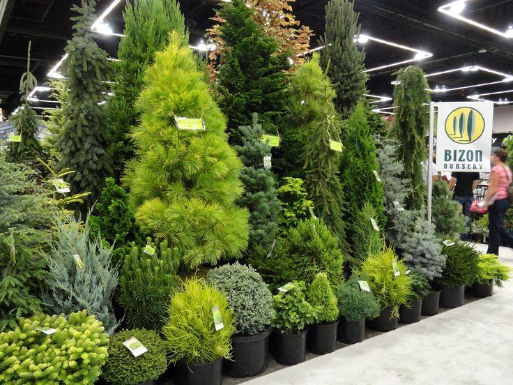 Conifers Plant Pics Pinterest Beautiful I Love And Love