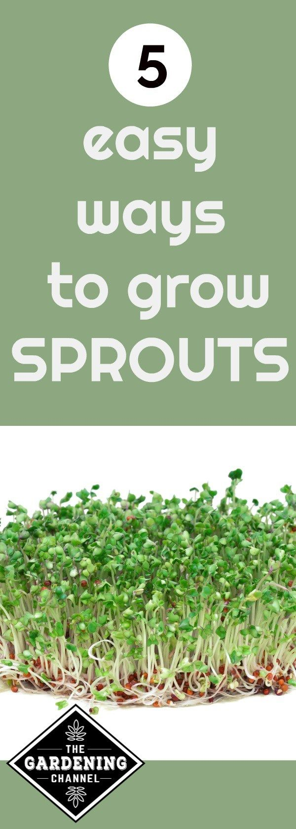 Sprouts are packed with vitamins.  Learn five easy ways to grow sprouts indoors with no special tools.  Try planting these seeds today and enjoy in less than 2 weeks.