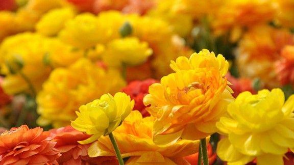 Sonbahar Çiçekleri #wallpaper #sonbahar #çiçek #autumn #flowers
