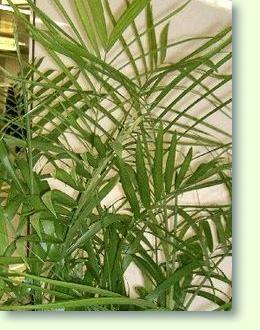 Die Besten 17 Bilder Zu Zimmerpflanzen Auf Pinterest | Kaktus ... Pflegetipps Hangende Zimmerpflanzen Raume Einfach Begrunen