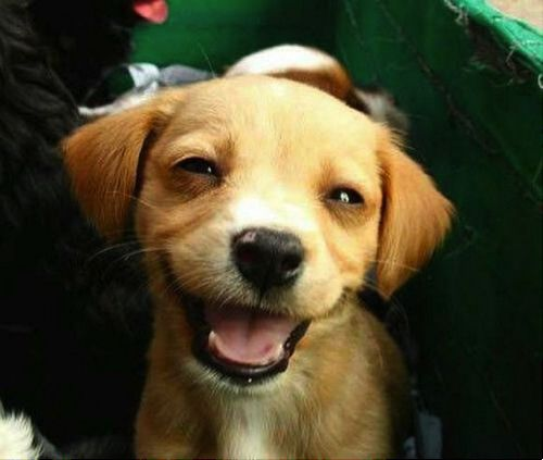 smile !: Puppies Faces, Happy Friday, Cute Puppies, Happy Baby, Happy Animal, Smile Puppies, Happy Dogs, So Funny, Happy Puppies