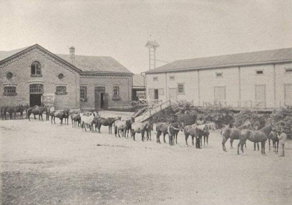 Aikoinaan Mustialan tallissa oli hevosia. Esimerkiksi vuonna 1922 aikuisia hevosia oli 40 ja varsoja 9. // Horses of Mustiala in 1922.