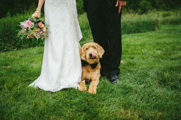 Dog in the wedding pics
