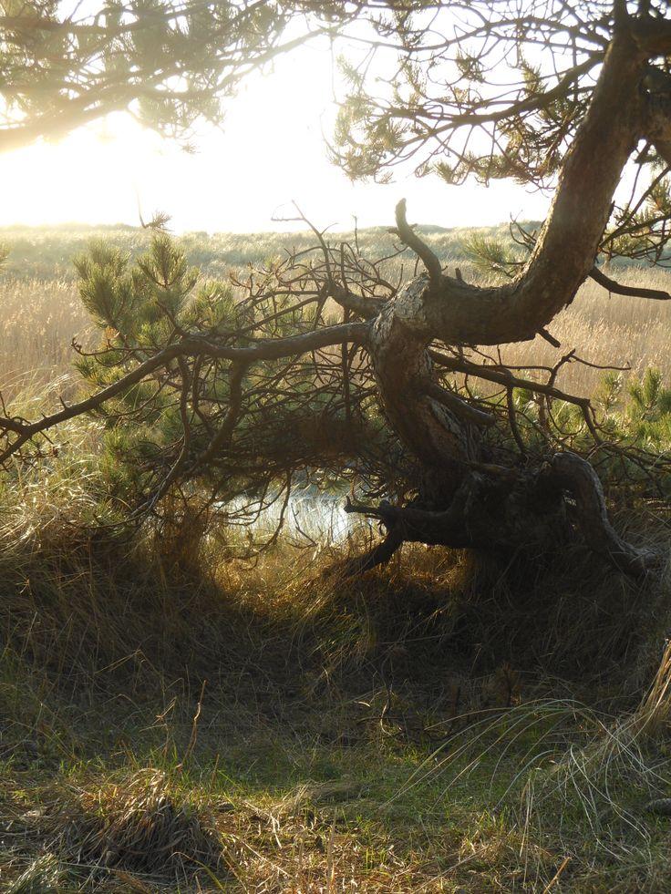 mooie boom bij het groene strand