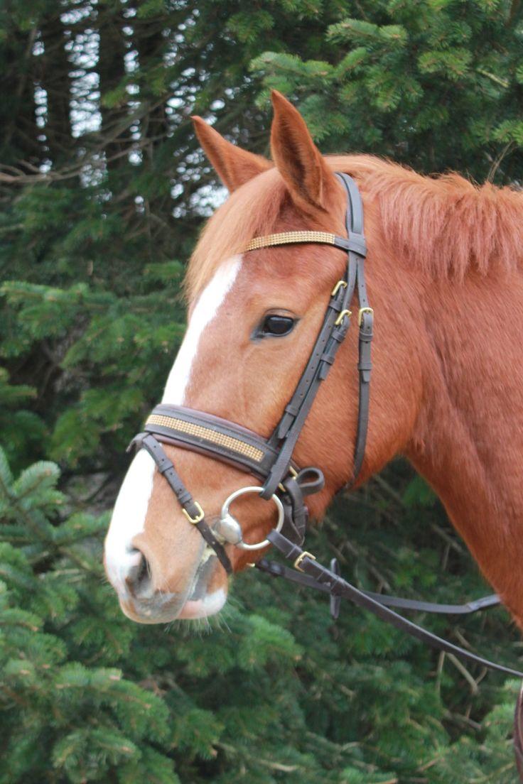 Heste under uddannelse | Holfelt stutteri – hestesalg, opdræftning og træning til privat og erhverv  Serinity er en utrolig ridelig, smidig og letgående hoppe. Hun springer med enormt overblik og kapacitet. #hest #hesteridning #