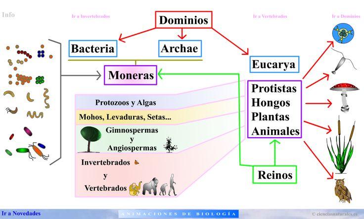 ... Clasificación del los seres vivos POR LOS TRES DOMINIOS. http://cienciasnaturales.es/taxonomia.html http://cienciasnaturaleses.blogspot.com.es/2015/06/clasificacion-biologica.html http://cienciasnaturales.es/animacionespanel.html http://cienciasnaturales.es/ctma.html