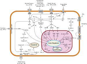 Phosphoinositide 3-kinase - Wikipedia, the free encyclopedia