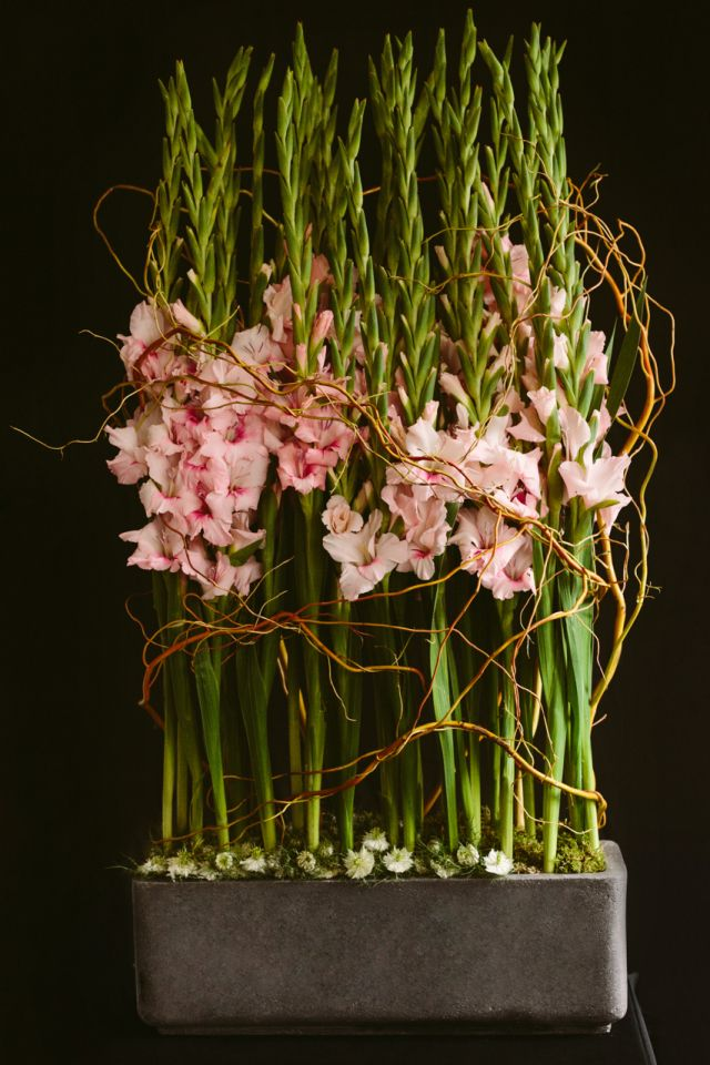 CONTEMPORARY WAY OF DISPLAYING GLADIOLI, IN OASIS IN A CONTAINER AND WITH TWIG WRAPPED ROUND TO CREATE A MODERN EDGE